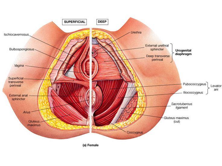 Treatment Options For Pelvic Organ Prolapse Minnesota Women S